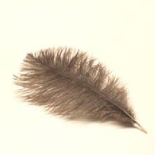 Grey Ostrich Feather